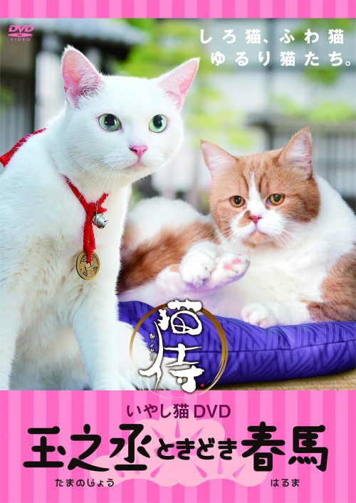 いやし猫 DVD 猫侍 玉之丞ときどき春馬